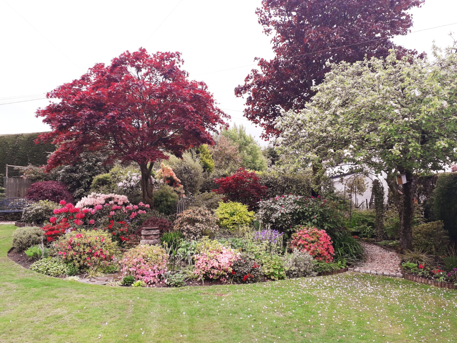 Back garden May 2020