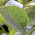 baldernock-plant-sale-3