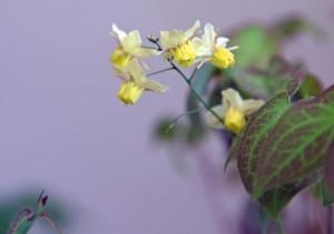 baldernock-plant-sale-5