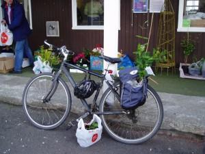 baldernock-plant-sale-6